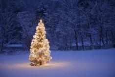 Fotostudio Achtergrondfoto op Vinyl - Kerst 20