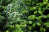 Fotostudio Achtergrondfoto op Vinyl - Kerst 11