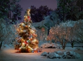 Fotostudio Achtergrondfoto op Vinyl - Kerst 24