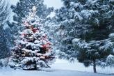 Fotostudio Achtergrondfoto op Vinyl - Kerst 30